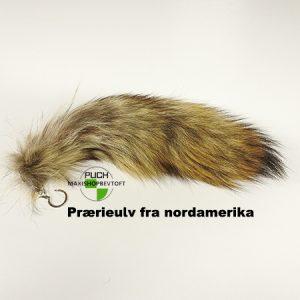 Ulve hale fra Prærieulv fra nordamerika med nøglering